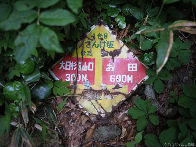 Qp6230011